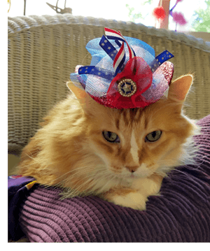 Chester - 4th of July hat