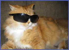Chester, The Cool Cat